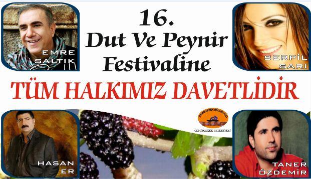 festival(1)