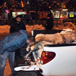 6 yaşındaki dağ keçisi avcılar tarafından katledildi!