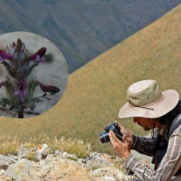 Munzur Dağları'nda yeni bir endemik bitki türü keşfedildi